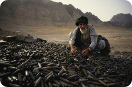 Афганский тест для ШОС