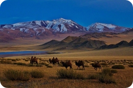The Phenomenon of Mongolia
